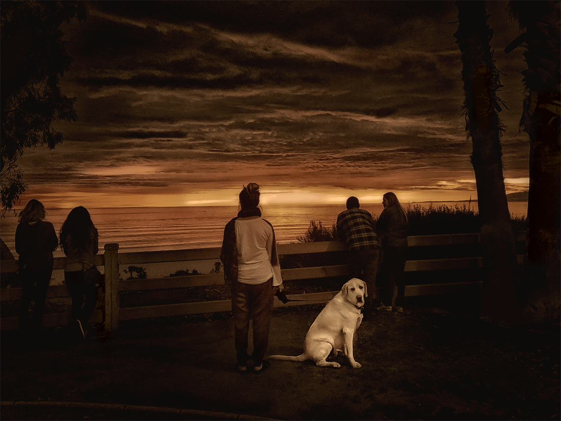 dog looking at camera while everyone else looks at sunset